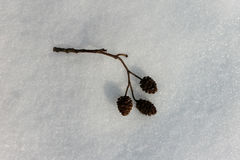 Brindille sur la neige Photos libres de droits