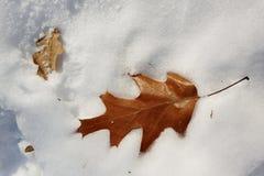 Brindille sur la neige Photographie stock libre de droits