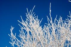 Brindilles blanches congelées d'arbre contre Skye bleu Photo stock