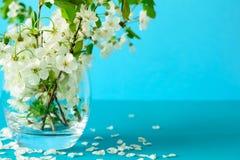 Brindilles blanches de fleurs de cerisier dans le vase en verre sur le fond de papier bleu Copiez l'espace Foyer sélectif image stock