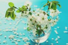 Brindilles blanches de fleurs de cerisier dans le vase en verre sur le fond de papier bleu Copiez l'espace Foyer sélectif images libres de droits