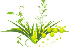 brindilles d'herbe Image stock