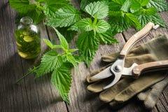 Brindilles d'ortie, bouteille saine d'infusion ou d'huile, gants et pruner de jardin photo stock