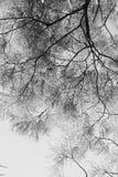 Brindilles dans le ciel photo libre de droits