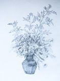 Brindilles dans un vase, illustration de crayon Photos stock