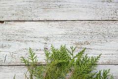 Brindilles de Thuja sur le fond en bois avec l'espace de copie image libre de droits