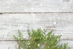 Brindilles de Thuja sur le fond en bois avec l'espace de copie images stock