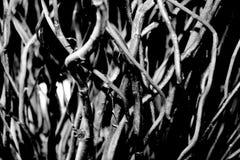 Brindilles en noir et blanc photo stock