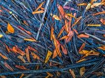Brindilles et feuilles Image libre de droits
