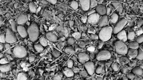 Brindilles et pierres en noir et blanc Images stock