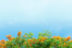 Brindilles, feuilles, mandarine Photographie stock libre de droits