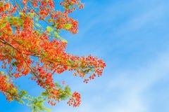 Brindilles, feuilles, rouges Photographie stock libre de droits