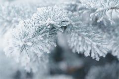 Brindilles givrées de sapin en hiver couvert de givre Images stock