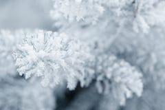 Brindilles givrées de sapin en hiver couvert de givre Image libre de droits