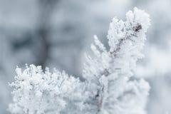 Brindilles givrées de sapin en hiver couvert de givre Photos libres de droits