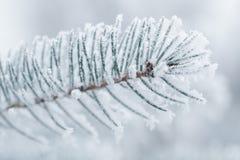 Brindilles givrées de sapin en hiver couvert de givre Images libres de droits