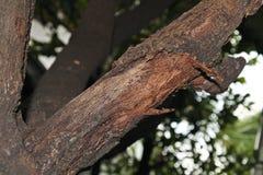 Brindilles sèches sur des arbres Photographie stock