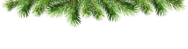 Brindilles vertes de pin pour la frontière de dessus de Noël Photos libres de droits