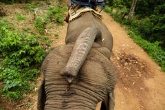 Bring me a banana. Elephant tour villaeg for walking in juggle Stock Photo
