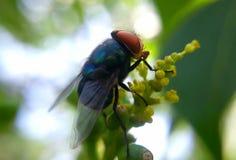 Bringen Sie Fliege unter Lizenzfreie Stockfotografie