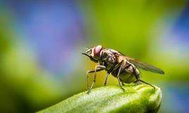 Bringen Sie Fliege unter Stockfoto