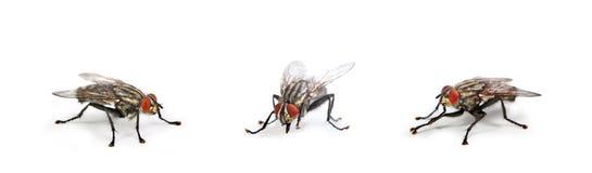 Bringen Sie Fliege unter Lizenzfreie Stockfotos