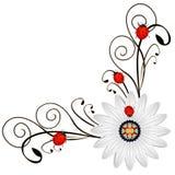 Bringen Sie mit dem abstrakten Gänseblümchen rote Marienkäfer auf a auf einem weißen Hintergrund in Verlegenheit Lizenzfreies Stockbild