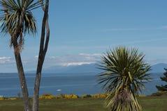 Bringen Sie Ruapehu an, der über dem See Taupo gesehen wird, das zwischen zwei Yucc gestaltet wird stockfotografie