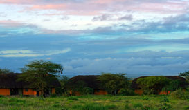 Bringen Sie in Samburu unter Lizenzfreie Stockfotos