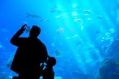 Bringen Sie und ein Sohn hervor, der Foto eines wilden Lebens des Korallenriffs im Aquarium am oceanarium macht Lizenzfreie Stockfotografie