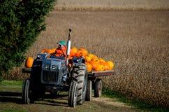 Bringing more pumpkins Stock Photography
