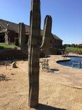 My metal cactus stock images
