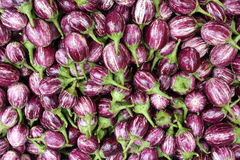 Brinjal Background Royalty Free Stock Image