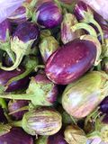 Brinjal Royalty Free Stock Photo