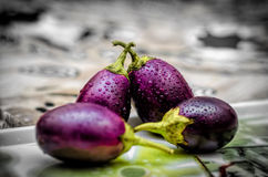 Brinjal vegetables background Stock Images