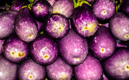 Brinjal view Royalty Free Stock Photo