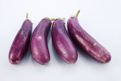 Brinjal Stock Photography