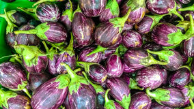 Brinjals or the eggplant Royalty Free Stock Photos