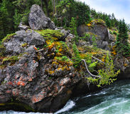 Brink of Upper Falls in Yellowstone National Park Royalty Free Stock Photography