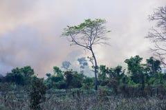 Brinnande bränning för brasiliansk amason Arkivfoto