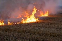 Brinnande flammafält av torrt sugrör Arkivfoto