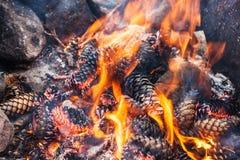 Brinnande kottar i en brand fotografering för bildbyråer