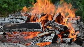 Brinnande trä stock video