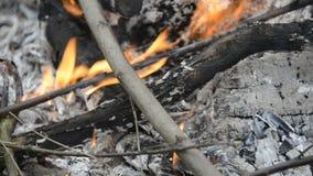 Brinnande trä, lägereldmakrovideo Varm spis mycket av trä stock video