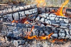 Brinnande vedträ i lägereld Arkivfoto