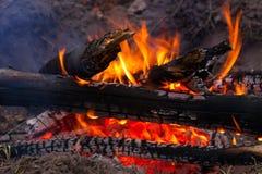 Brinnande wods Arkivbild