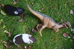 Brinque a ave de rapina do monstro do dinossauro que luta com a cobaia na grama verde Imagem de Stock Royalty Free