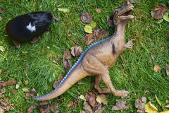 Brinque a ave de rapina do monstro do dinossauro que luta com o porco de Nova Guiné na grama verde Foto de Stock