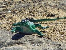 Brinquedo bonito do lagarto imagem de stock