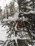 Brinquedo da árvore de Natal nas madeiras fotografia de stock